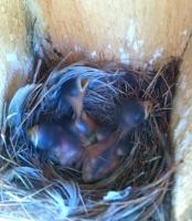 Nest4