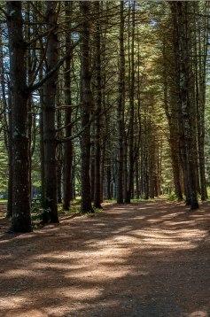 Trail_Day